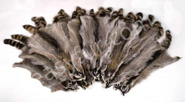 Canadian Raccoon Skins (Fur Harvesters)