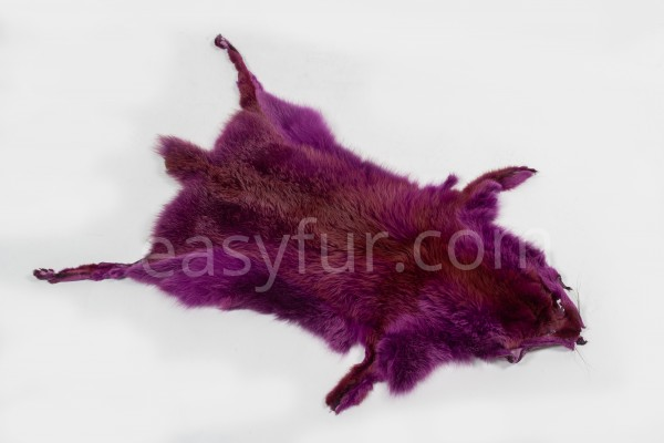 European Red Fox Skins in purple