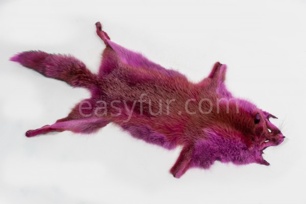 European Red Foxes in pink